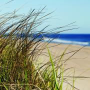 images/The Source/beach grass square OS.jpg